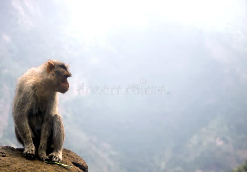Aap bij een Kloof, India royalty-vrije stock afbeeldingen