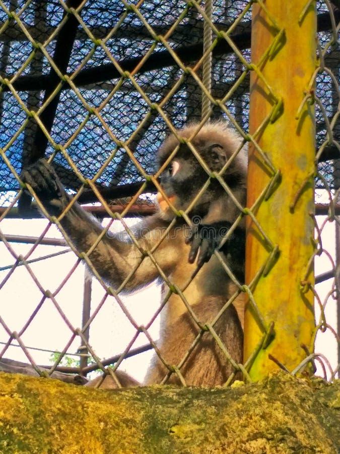Aap in een dierentuin stock foto