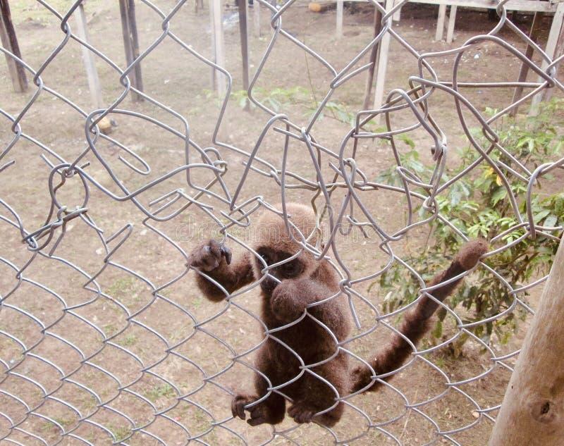 Aap in een gevangenis stock foto