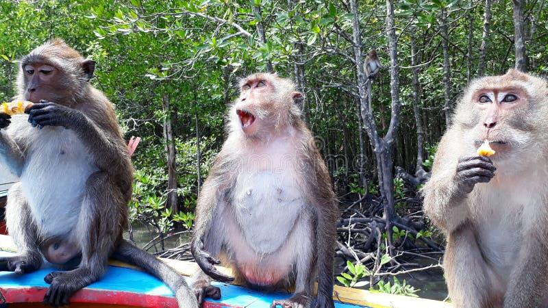 aapfamilie in Thailand die ananas eten stock afbeeldingen