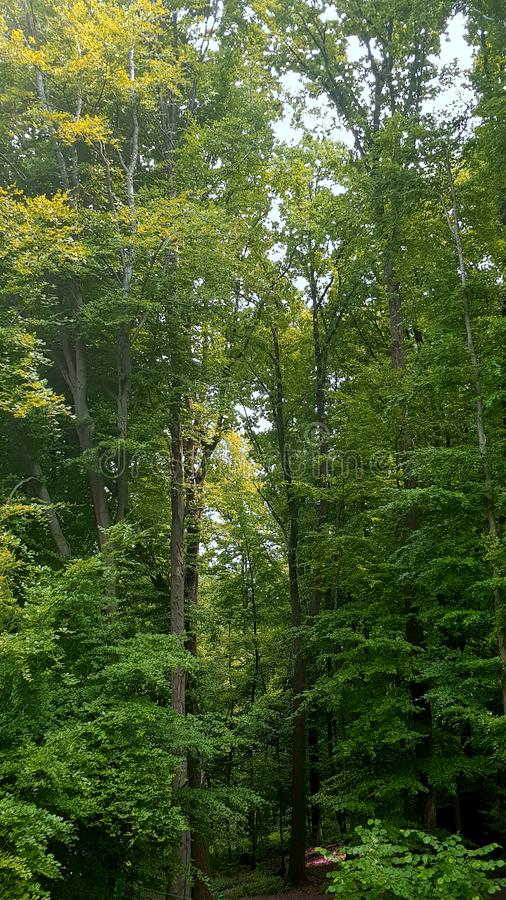 Aard bos groene bomen royalty-vrije stock afbeeldingen