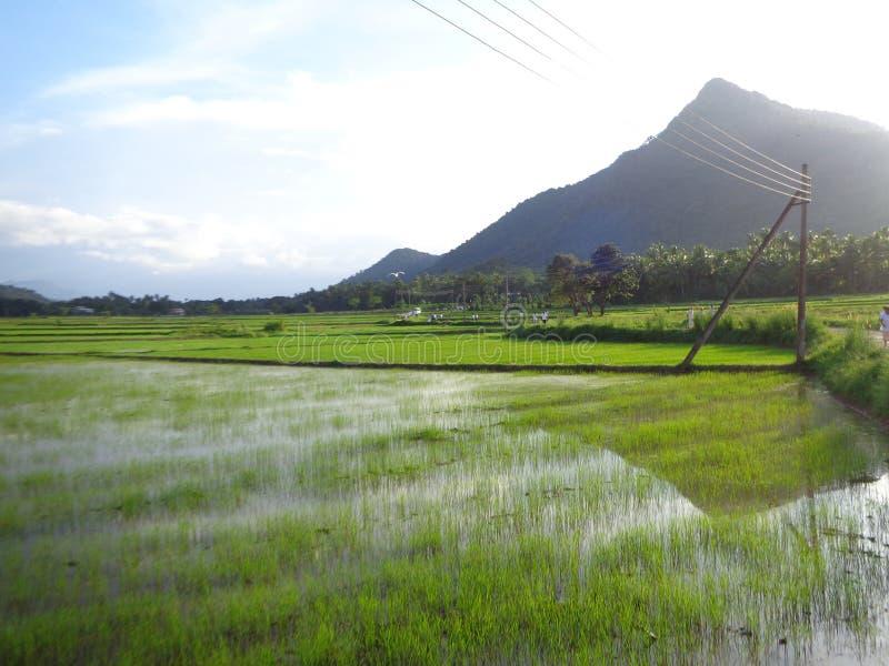 Aard en berg fadifield in Sri Lanka stock afbeeldingen