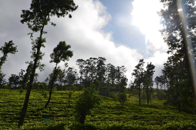 Aard en de Staat van de bergthee in Sri Lanka royalty-vrije stock foto