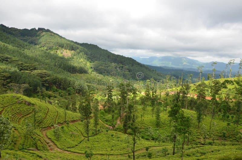 Aard en de Staat van de bergthee in Sri Lanka royalty-vrije stock afbeelding