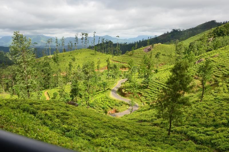 Aard en de Staat van de bergthee in Sri Lanka royalty-vrije stock fotografie