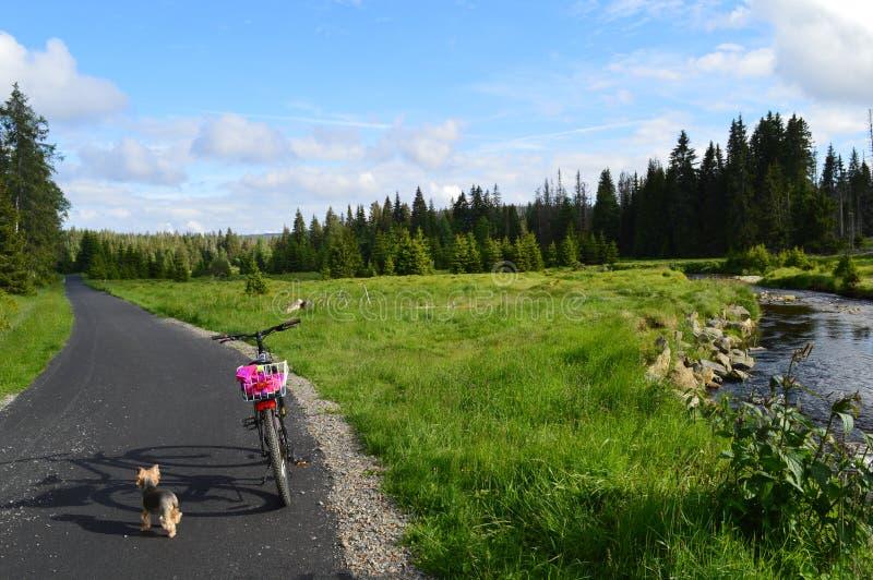 Aard en fiets royalty-vrije stock foto's