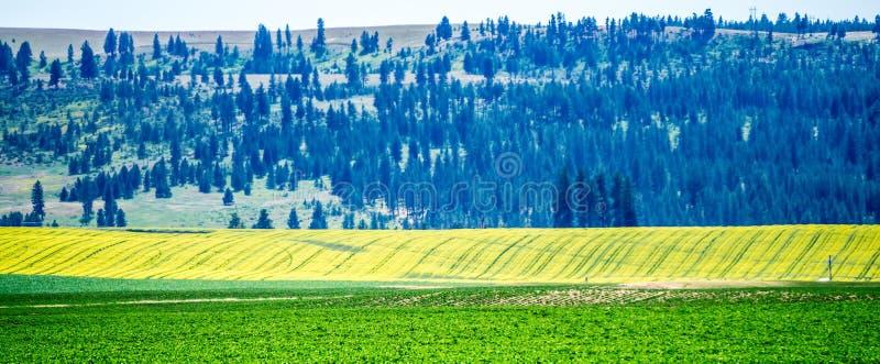 Aard en landschappen in de reserve van Spokane dichtbij de rivier van Spokane Colombia royalty-vrije stock afbeeldingen