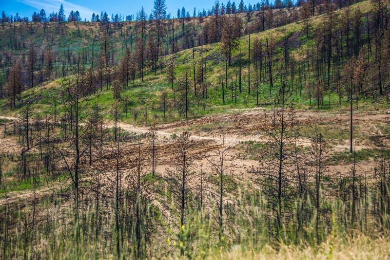 Aard en landschappen in de reserve van Spokane dichtbij de rivier van Spokane Colombia royalty-vrije stock foto's