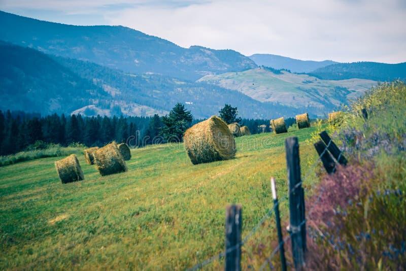 Aard en landschappen in de reserve van Spokane dichtbij de rivier van Spokane Colombia stock foto