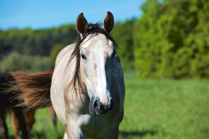 Aard en Paard royalty-vrije stock afbeelding