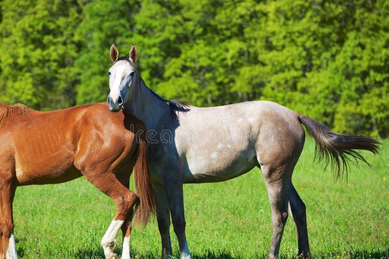 Aard en Paard stock foto's
