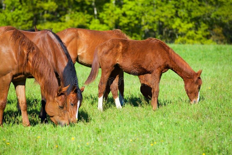 Aard en Paard royalty-vrije stock foto