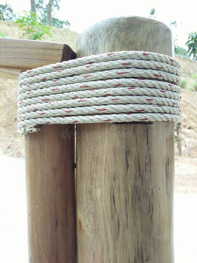 aard houten boom royalty-vrije stock afbeelding
