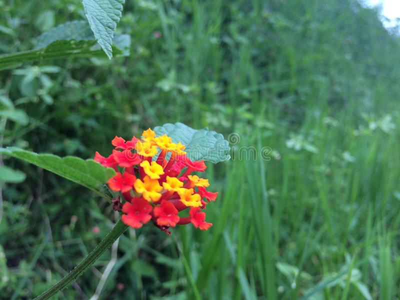 Aard kleurrijke bloemen en kleurrijk bi stock afbeelding