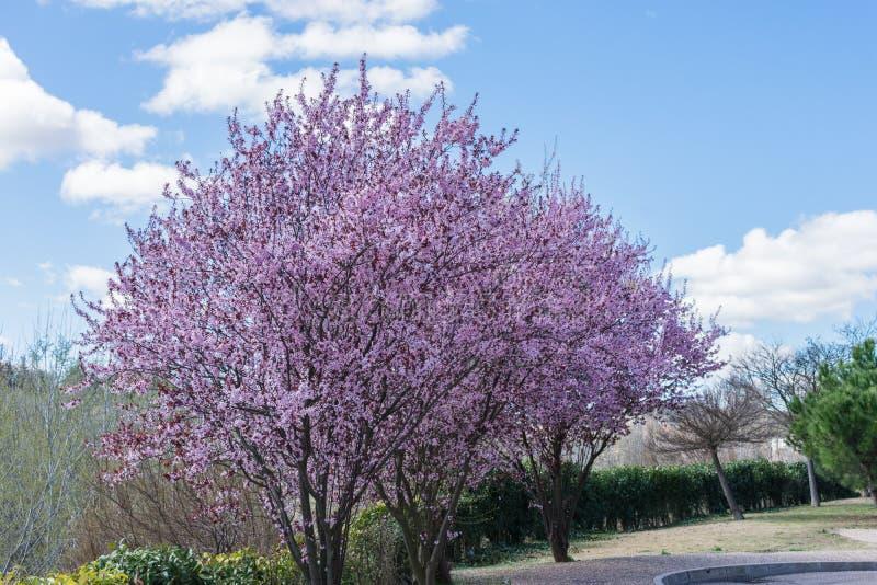 Aard met de lentebloemen op zonnige dag stock afbeeldingen