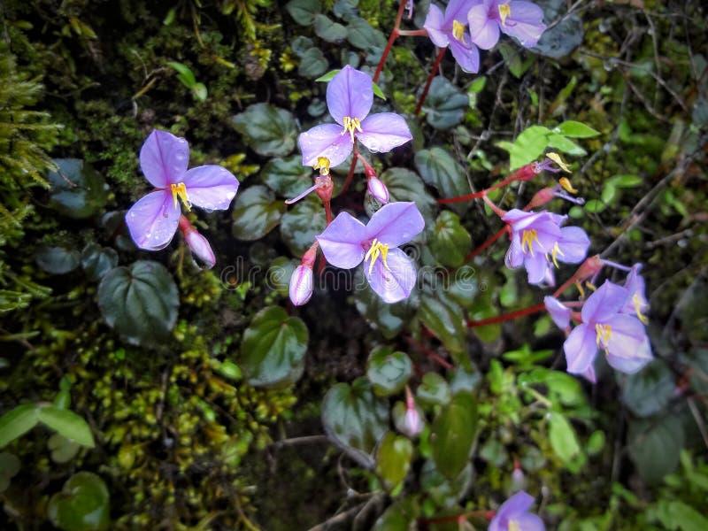 Aard met groen gras en purpere bloemen stock foto's