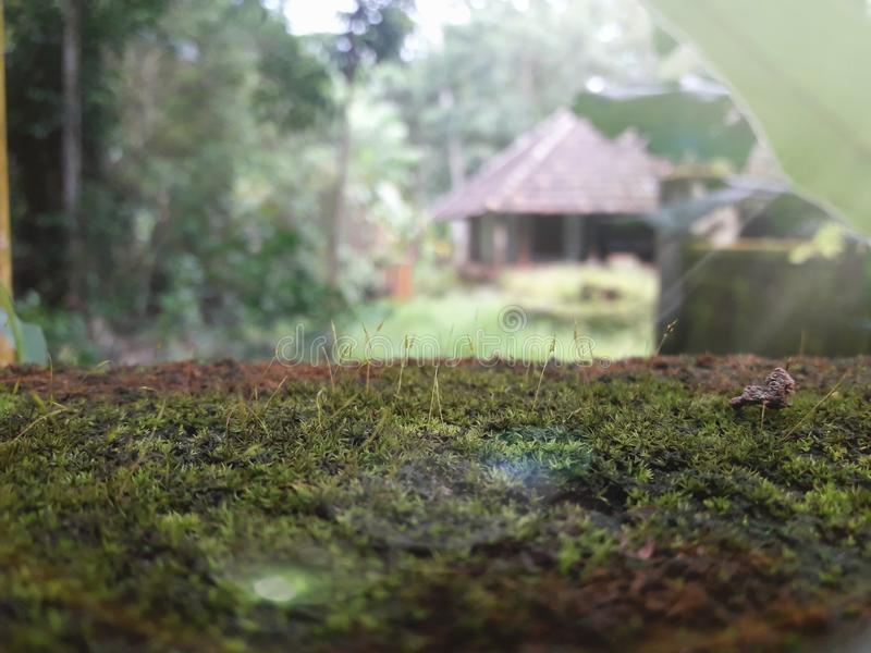 Aard met traditioneel huis als achtergrond stock foto's