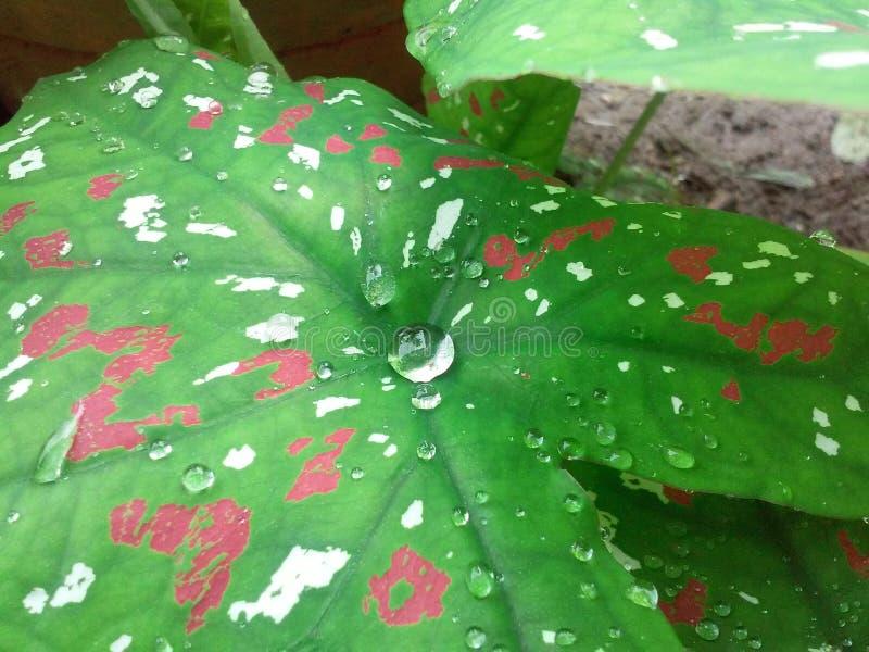 Aard in moesson royalty-vrije stock afbeelding