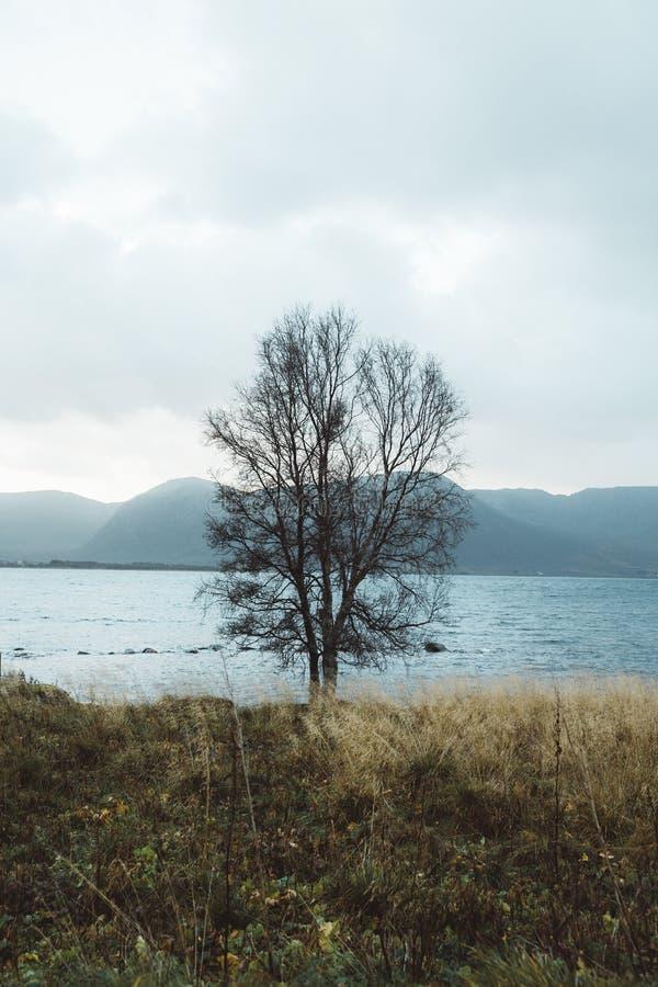 Aard in Noord-Noorwegen royalty-vrije stock fotografie
