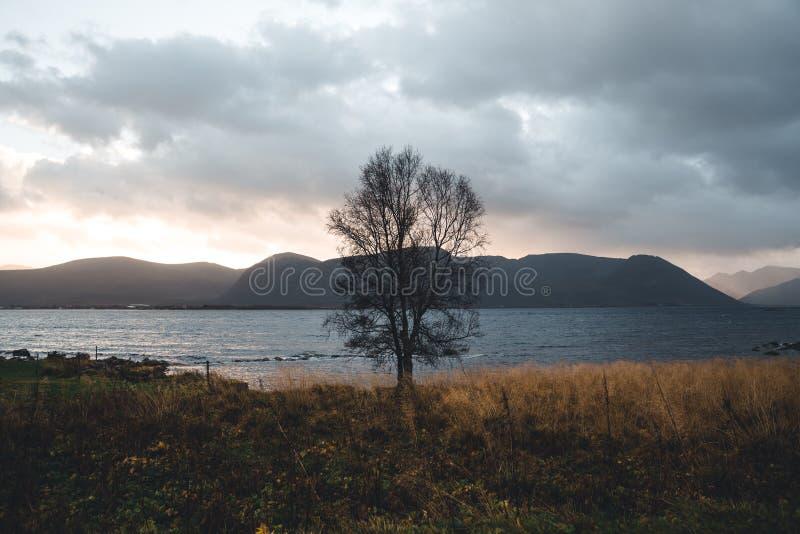 Aard in Noord-Noorwegen stock foto's