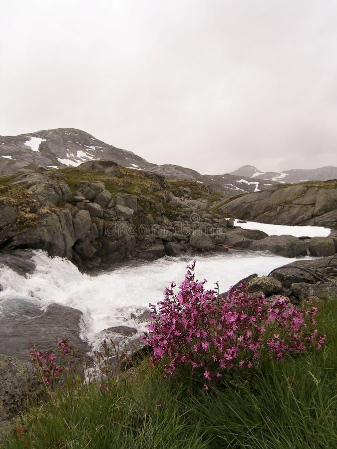 Aard in Noorwegen. stock foto's