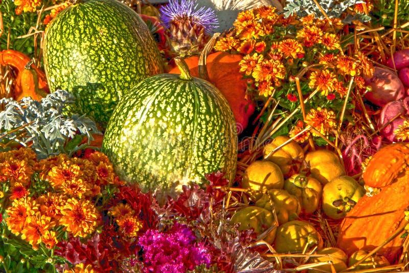 Aard op daling, pompoenen en dahlia's stock foto