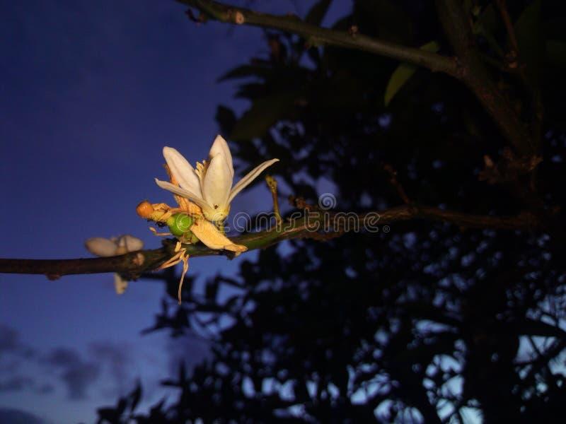 Aard, rust, schoonheid, nacht, boom stock foto