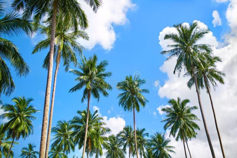 Aard Tropische Bomen Kokospalmen onder Blauwe Hemel, Mooie B royalty-vrije stock fotografie