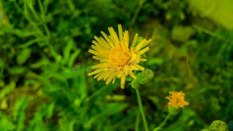 Aard, tuin, gele bloem, groen, stock afbeelding