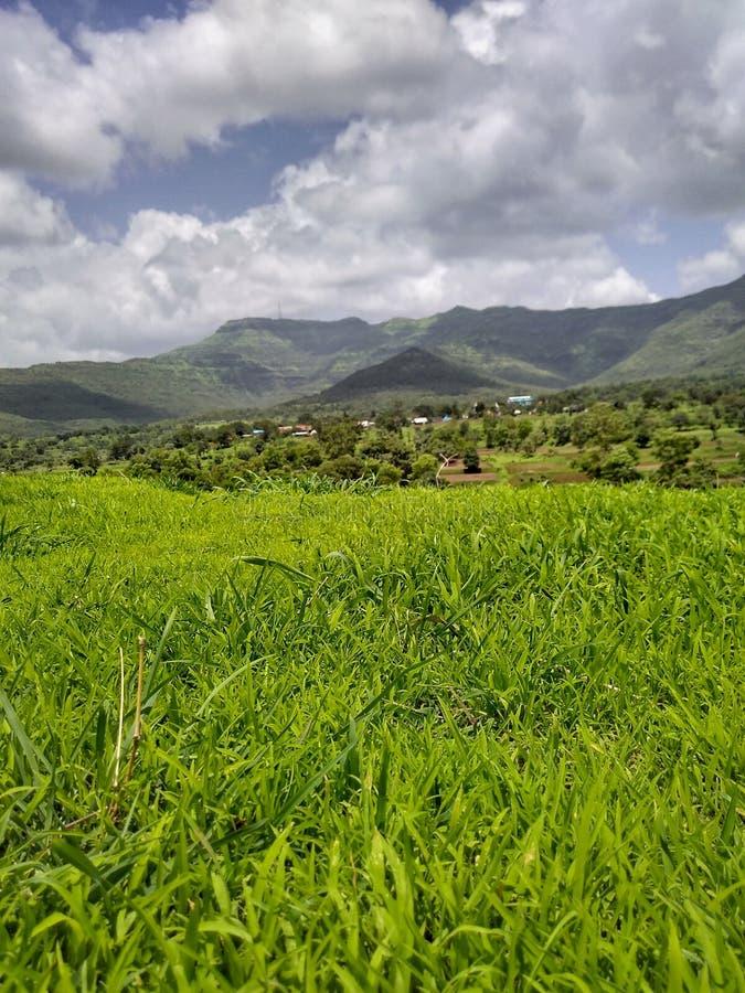 Aard van de het Verse Groene Gras en Berg van India stock afbeeldingen