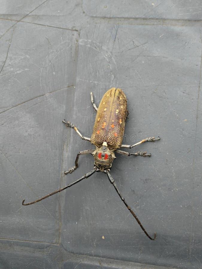 aard van de insect de wilde foto royalty-vrije stock fotografie