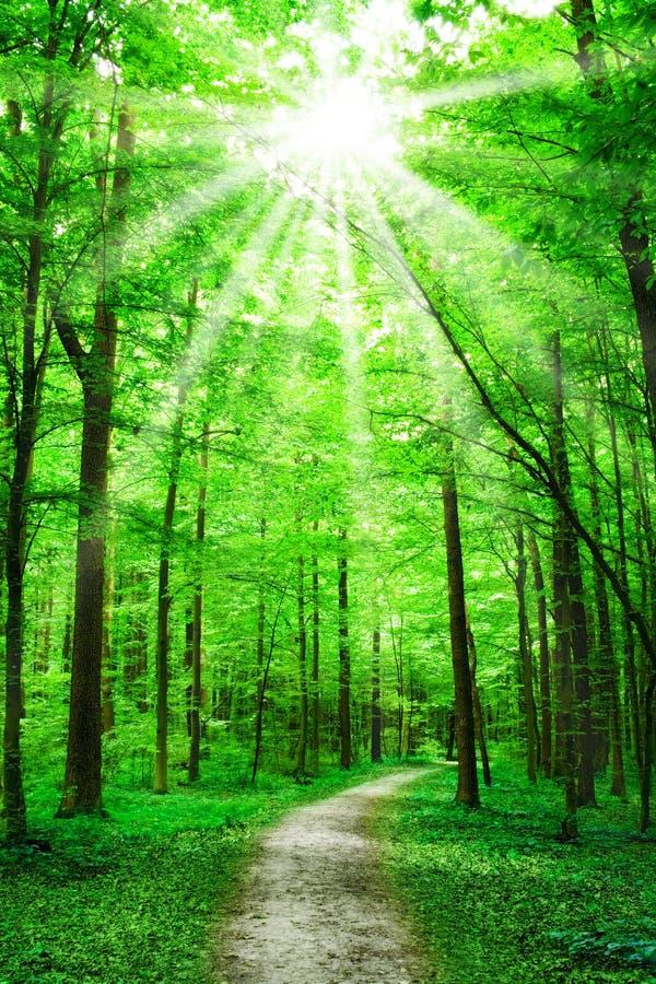 Aard. weg in bos met zonneschijn stock foto
