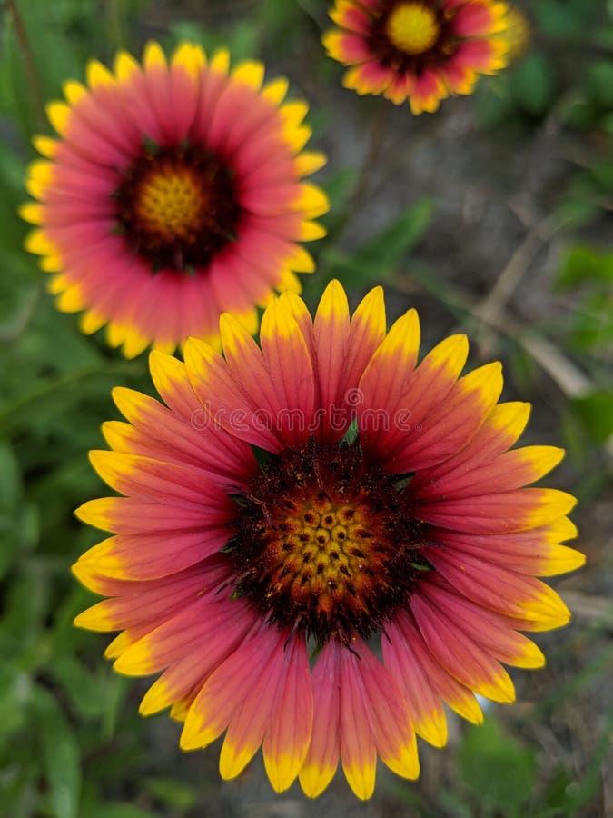 Aard Wildflowers stock foto's