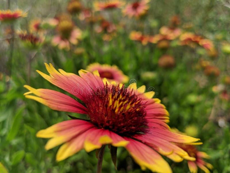 Aard Wildflowers stock foto