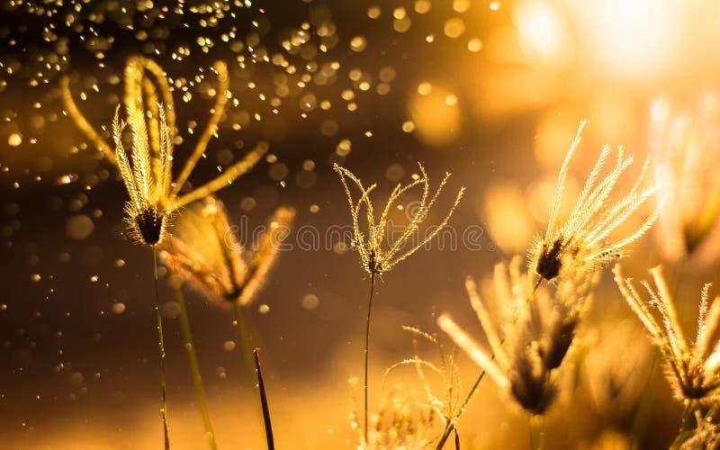 aardachtergrond met gras en zonsondergang stock foto's