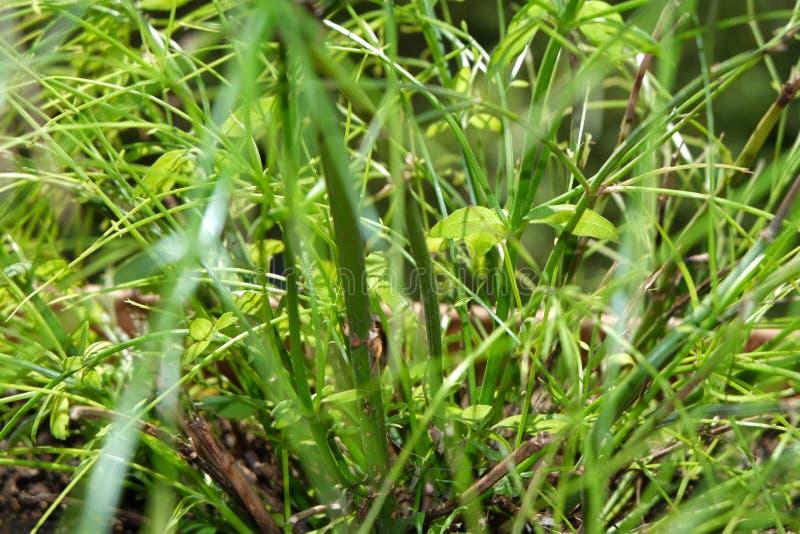 Aardachtergrond van dauwdalingen op gras in ochtendlicht royalty-vrije stock afbeeldingen