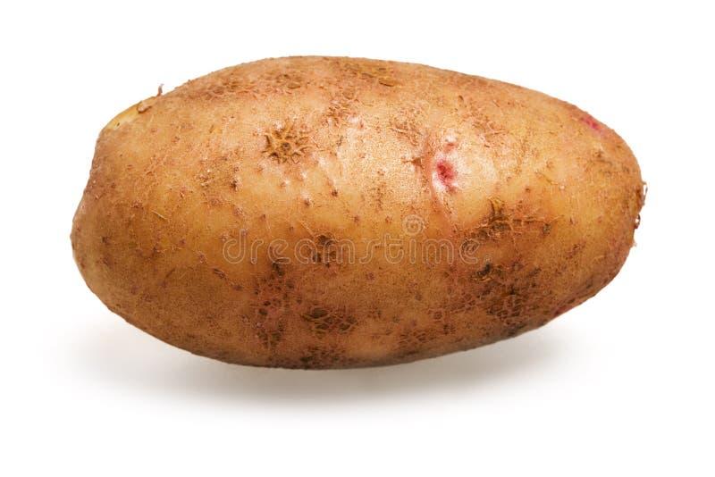 Aardappel stock fotografie