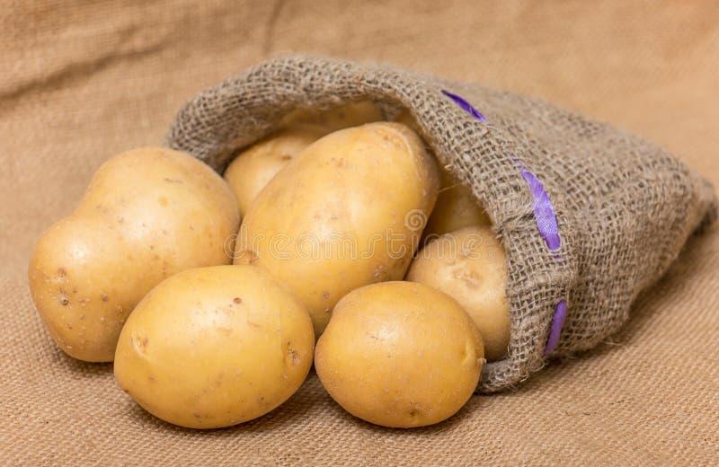 Aardappel royalty-vrije stock afbeelding