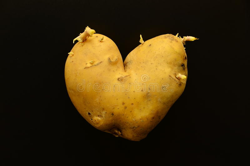 Aardappel royalty-vrije stock foto