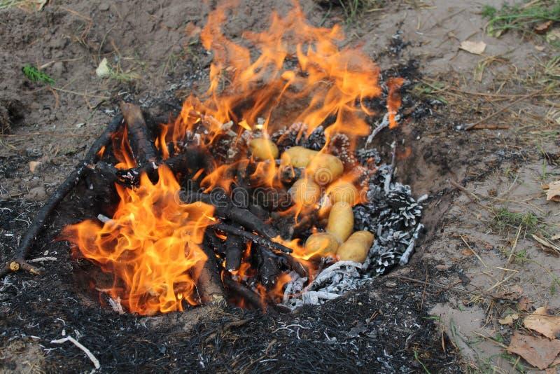 Aardappelen in de schil, op steenkolen van kegels en pijnboom Het gezonde eten in de verse lucht stock foto's