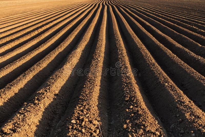 Aardappelgebied in de vroege lente met de het zaaien rijen die lopen aan stock foto