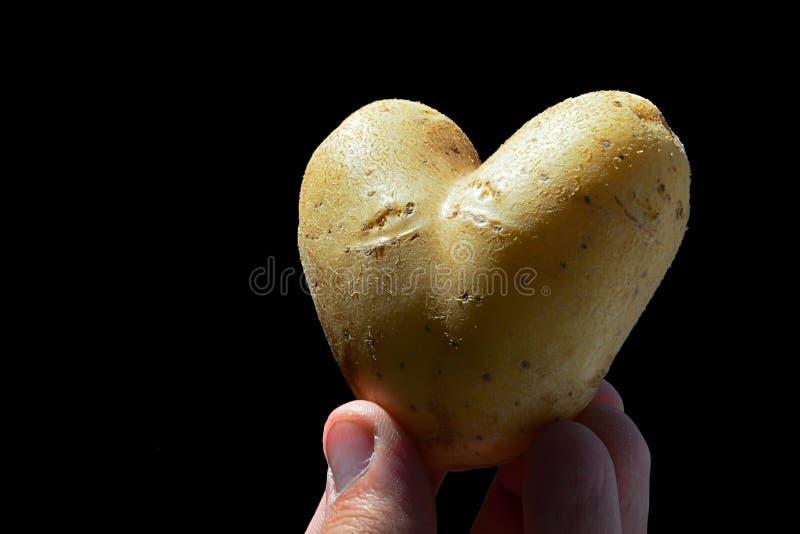 Aardappelhart of knol van aardappel Solanum tuberosum als hart in vingers van linkerhand van de volwassen mannelijke mens, zwarte royalty-vrije stock foto's