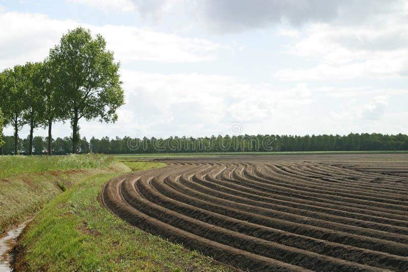 Aardappelruggen   photographie stock libre de droits