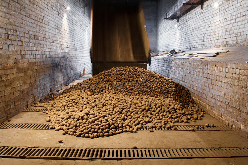 Aardappels in opslaghuis stock foto