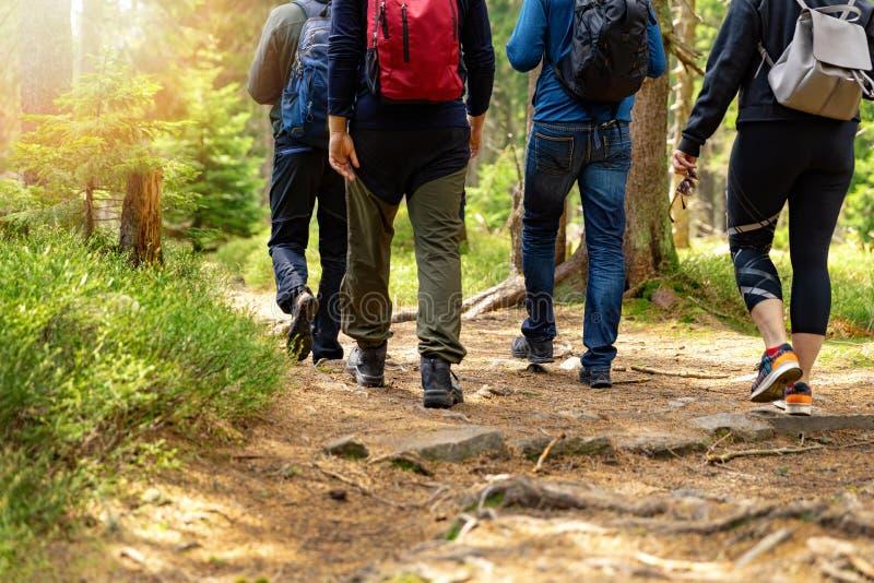 Aardavonturen - groep vrienden die in bos met rugzakken lopen stock fotografie