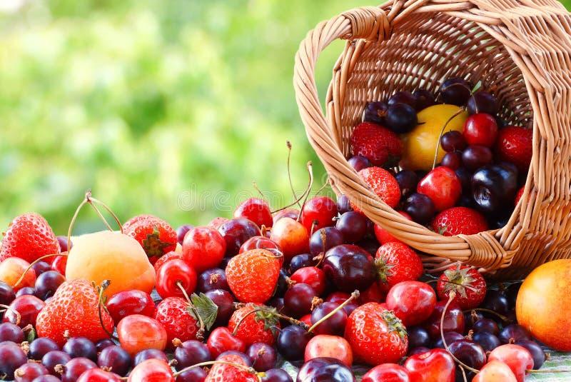 Aardbei, abrikozen, kersen, kruisbessen uit de mand worden gegoten die Het stilleven van de zomer royalty-vrije stock afbeelding