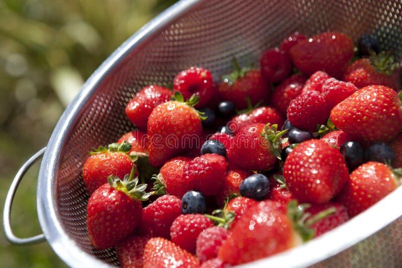 Aardbei, bosbes en rasberries royalty-vrije stock foto