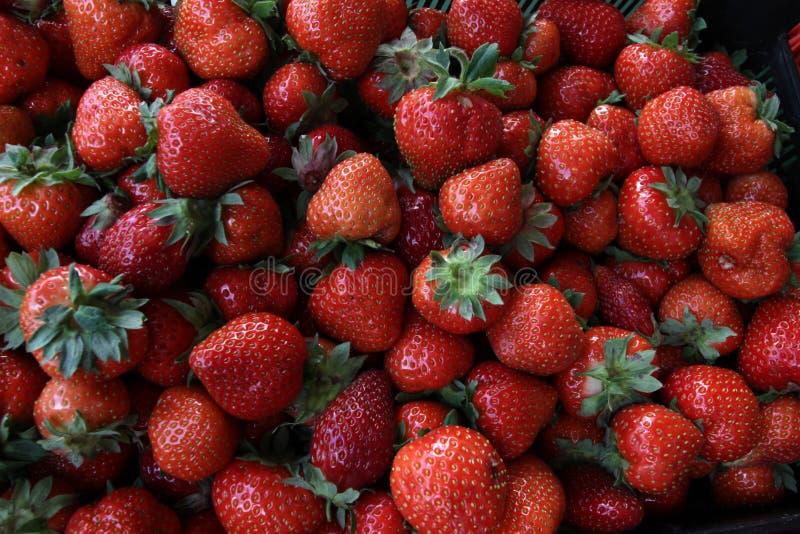 Aardbei Verse organische aardbeien in daglicht op een markt Vruchten achtergrond Gezond voedsel Heel wat helder, is verse bessen  stock afbeeldingen