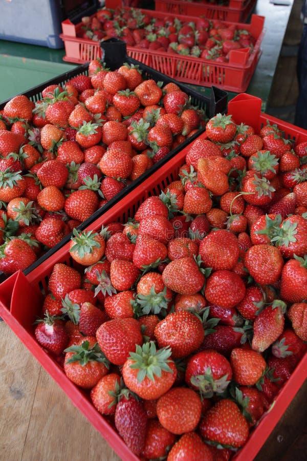 Aardbei Verse organische aardbeien in daglicht op een markt Vruchten achtergrond Gezond voedsel Heel wat helder, is verse bessen  royalty-vrije stock afbeelding