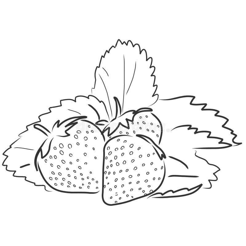 Aardbeien stock illustratie